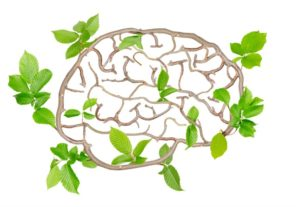 Love + Medicine - Neuroplasticity